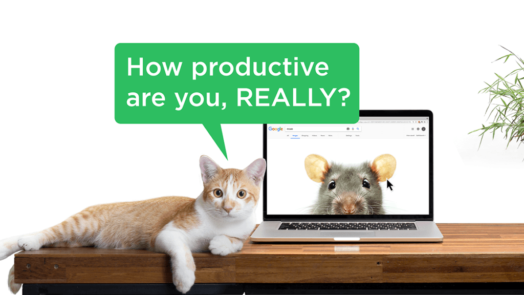 Cat sitting on desk next to computer asking how productive are you really